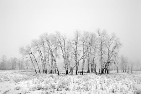 Frost and fog at Elk Island