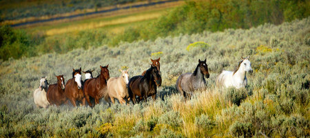 Galloping Herd